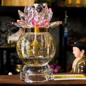 Sen Đèn Dầu Lưu Ly